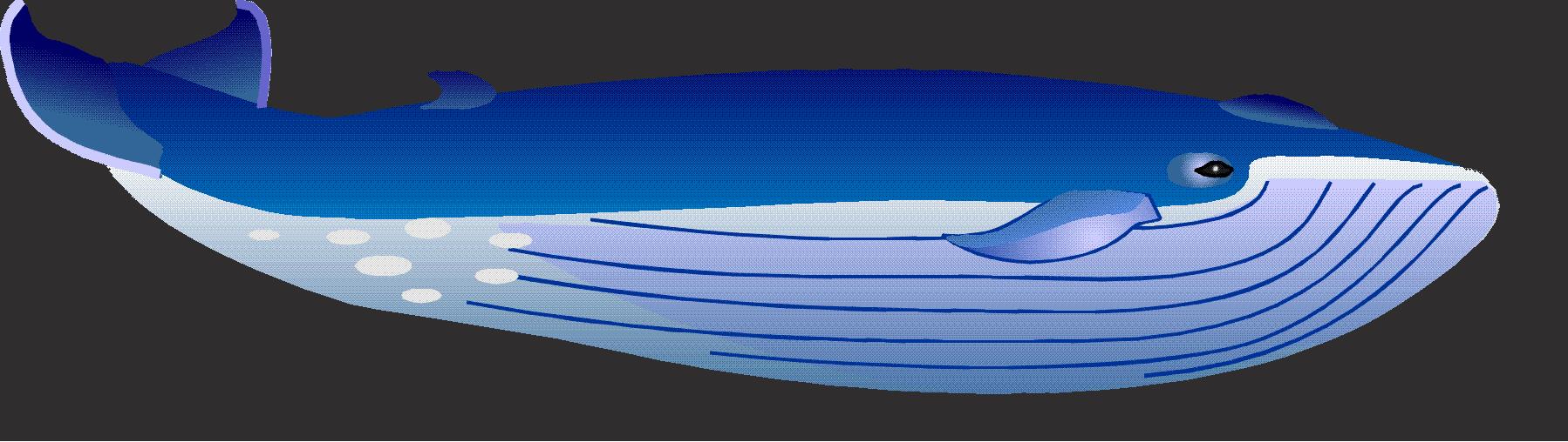 Watersportbedrijf Moby Dick